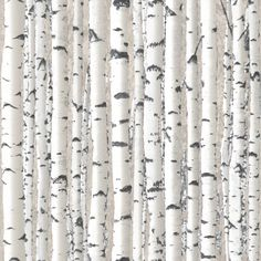 Muriva Wallpaper | Trees - Silver Birch | Lancashire Wallpaper and ...