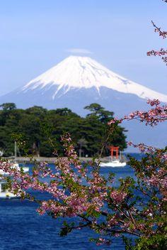 春の訪れ by Takumi Yata - Photo 99824219 - 500px