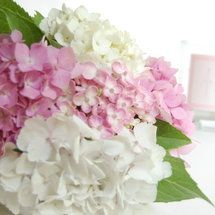 Hydrangea Bouquet info. Soak blossoms all night before (or night before that) and then make them the next day (wedding day or rehearsal day).