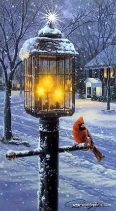 A lone cardinal seeks warmth under a nostalgic street lamp. This is the first print in Darrell Bushs winter bird series Warmth of Winter. Merry Christmas Gif, Christmas Photos, Winter Wonderland Wallpaper, Snow Night, Good Morning World, Winter Images, Country Art, Cross Country, Snow Skiing