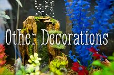 There are many different options for decorating a fish tank. How can you be sure that what you are adding is appropriate for your fish? Aquarium Decorations, Can You Be, Aquarium Fish, Water Features, World, Fish Tanks, Hard Work, Decorating, Pets