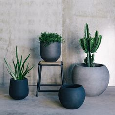 Another from my recent shoot with the @thebalconygarden . Such amazing pots, I wanted to take them all home but knew @stevekouta wouldn't let me bring any more pots home  #thebalconygarden