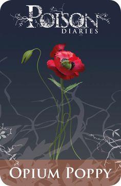 Gentil Coquelicot Mesdames ♫... #Poppies -- Opium Poppy