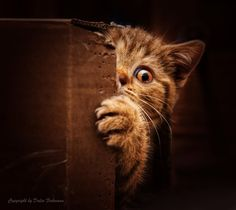 Who wants to play hide and seek by Dalia Fichmann on 500px ~ excellent capture! cat kitten