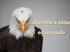 Atrévete a Ser Realmente Tú Eagle Wallpaper, Hd Wallpaper, Eagle Images, Me Equivoco, Bald Eagle, Funny Pictures, Portrait, American Freedom, Wallpapers