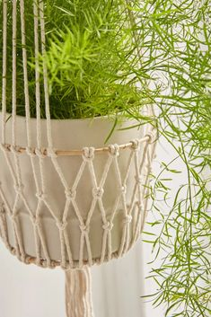 Organic Gardening In South Florida Macrame Hanging Planter, Macrame Plant Holder, Macrame Plant Hangers, Plant Holders, Hanging Plants, Plants Indoor, Air Plants, Cactus Plants, Crochet Plant Hanger