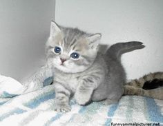 my cute kitty Cute Kittens, Cats And Kittens, Like Animals, Baby Animals, Cute Black Kitten, Kitten Mittens, Cute Little Baby, Baby Deer, Cute Animal Pictures