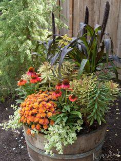 Euphorbia 'Ascot Rainbow', Purple Millet, Sombrero Echinacea, Chrysanthemum and Limelight Licorice Plants