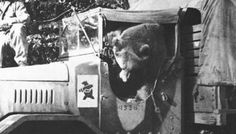 20 Images of Corporal Wojtek, the Polish Bear and Hero of WWII.