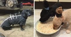 15+ Creative Dog Owners Who Did Pawesome Things For Their Dogs   Bored Panda