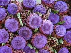 https://flic.kr/p/zuqf | Artichoke Blooms | Artichoke Blooms at the Louramin Market in Provence