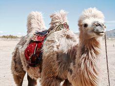 Routes, Ocean Life, Fur Babies, Sage, Beast, Cute Animals, Creatures, Inspiration, Camels