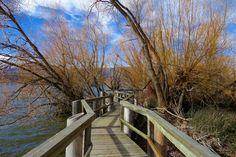 💬 New free photo at Avopix.com - Blue sky branches bridge railing countryside    🆓 https://avopix.com/photo/54939-blue-sky-branches-bridge-railing-countryside    #sky #bench #travel #railing #landscape #avopix #free #photos #public #domain