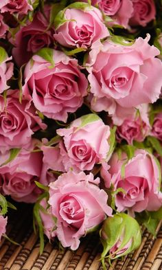 Download 480x800 «Pink Roses» Cell Phone Wallpaper. Category: Flowers