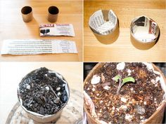 Make Indoor Planters out of Cardboard Toilet Paper Rolls. #diy #gardening http://www.ivillage.com/diy-month-gardening-upcycling-ideas/7-b-439299#439749