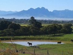 View towards Simonsberg from Durbanville near Cape Town. Dream City, My Dream, Story People, Best Hospitals, Most Beautiful Cities, Places Of Interest, Cape Town, Countryside, South Africa