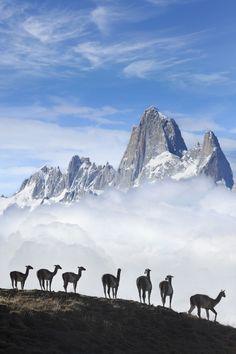 Animal herd in Argentina's El Chalten