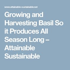 Growing and Harvesting Basil So it Produces All Season Long – Attainable Sustainable