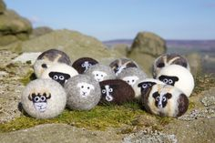 The MOST adorable wool dryer balls every! Wool dryer balls pack of 3 Jacob sheep felted by LittleBeauSheep