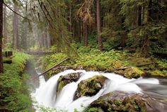 Insider's Guide to Olympic National Park | Seattle Met
