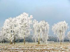 Een winters landschap kan er sprookjesachtig mooi uitzien. Foto: Elly van Niekerk - Aangeboden door Meteogroup Nederland BV