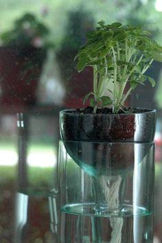 como fazer cachepô para plantas reciclando uma garrafa de vinho. E o melhor: ele mantém suas plantinhas regadas automaticamente! Confira!