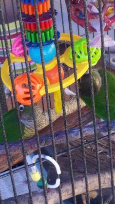 Tilt-a-Whirl bell toy - Animal Enrichment Australia/FB