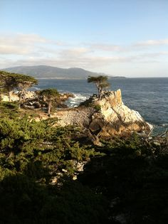 The best photo my iPhone has ever taken. Lone cypress near Monterey, CA- I have this pic too. Love it.