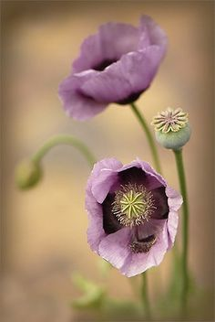 delicate and lovely. there's such great beauty to me in fragility.  Fragility is never coarse..