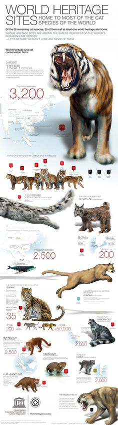 World Heritage sites home to endangered big cats Infographic