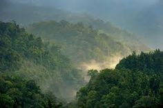 forests - Google Search