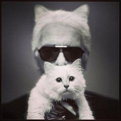 """""""Ich hätte nie gedacht, dass ich mich so in eine Katze verlieben könnte"""""""
