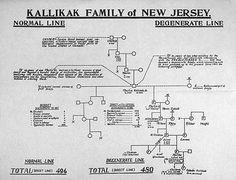 Kallikak family of New Jersey pedigree chart. Courtesy of the American Philosophical Society.