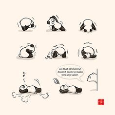 That's A Funny Yoga Position 2 | Panda and Polar Bear