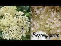 Bezový sirup (sirup z květů černého bezu) - Recepty z přírody - YouTube Youtube, Syrup, Youtubers, Youtube Movies