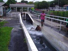 Length 30m, Depth 3.5m, Width 2.65m, Double filtration system with pre filter and sand filter. Each morning and afternoon approximately 500 horses use the swimming pool to allow horses a variation in their weekly training schedule. The water pH and Chlorine level is constantly monitored to ensure good quality water for the pool.