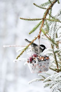 Make a winter bird feeder with these easy DIY projects and tutorials! It's easy to make a few DIY bird feeders with these garden ideas! The birds will love these DIY bird feeders! Winter Snow, Winter Christmas, Christmas Tree, Winter Leaves, Christmas Garden, I Love Winter, Winter Magic, Winter Colors, Winter Fun