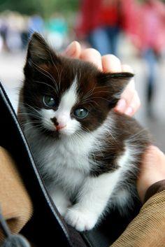 Kitty By Ann Demina