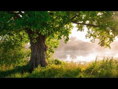 Relaxing Instrumental Background Music for Stress Relief 24/7 - YouTube Calming Songs, Relaxing Music, Lucas 12, Alphonse Mucha, Meditation Music, Piano Music, Stress Relief, Youtube, Artist