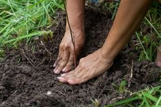 Have you ever wondered how to plant a tree? If you want to plant a tree in your homestead, consider the trees from twigs method. It's fun and easy to do!