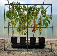 Home Grown Vegetables, Growing Vegetables, Container Gardening Vegetables, Vegetable Garden, Plant Supports, Planters, Yard, Frame, Holiday