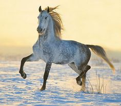 Photos of horses of Russian breeds by Ekaterina Druz Equine Photography All The Pretty Horses, Beautiful Horses, Animals Beautiful, Horse Photos, Horse Pictures, Zebras, Campolina, All About Horses, Majestic Horse