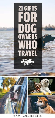 Travelers who own dogs have their own specific types of travel problems that are hard to understand unless you've got a pet of your own. Here are a few ideas for gifts that will make their lives a little easier. | Gifts For Dog Owners | Traveling With Dogs | Travel Dogs | Dogs Who Travel | Dogs Travel Too | Gifts For Traveling Pet Owners | Dog Travel Gear | Dog Travel Accessories | USA