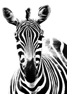 Zebra Halloween Costume, Zebra Costume, Animals Images, Cute Animals, Horse Outline, Zebra Face, Animal Makeup, Theme Nature, Face Images