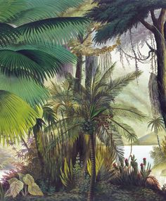 Panoramic wallpaper Sources of the Orinoco color Palm Leaf Wallpaper, Scenic Wallpaper, Tropical Wallpaper, Wallpaper Decor, Pattern Wallpaper, Tropical Art, Tropical Design, Wall Murals, Wall Art