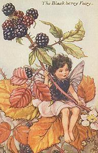 Cicely Mary Barker   The Blackberry Fairy