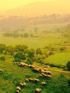 pastoral countryside........sheep are so comforting