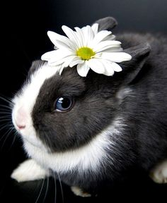 Bunny rabbit daisy flower crown