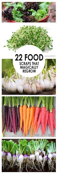 Recycling is great, especially when you can recycle your food. Stop throwing those old scraps away, because believe it or not, those veggies can be regrown! Here are 22 foods that magically regrow, you'll never have to buy celery again! #HomeHydroponics