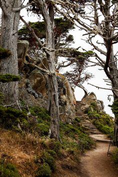 Gorgeous Walking Trails Point Lobos Looks like a nice hike! I Love YOU!!! I really do want to go anywhere with you!!***